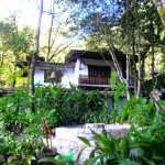 One of the Casitas set in this 13 acre jungle garden