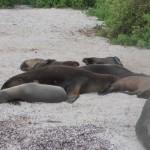 Sea-lions on beach