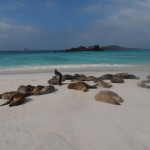 Beautiful sandy beach with a colony of noisy sea lions.