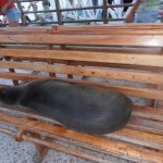 Sea-lion resting on the seat