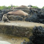 Sea-lions blocking our way forward