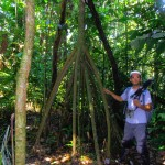 One of the many strange tree roots in the jungle