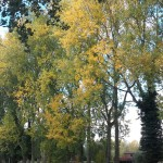 Trees changing colour
