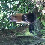 My favourite bit, the monkeys, they were fun to watch