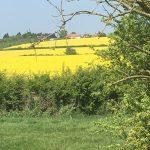 Rape Fields, lovely scenery